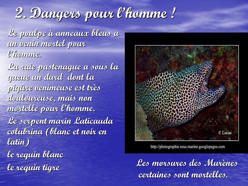 2. Dangers pour lhomme ! Le poulpe à anneaux bleus a un venin mortel pour lhomme. La raie pastenague a sous la queue un dard dont la piqûre venimeuse