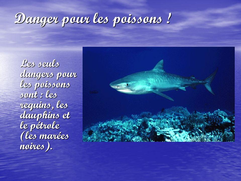 Danger pour les poissons ! Les seuls dangers pour les poissons sont : les requins, les dauphins et le pétrole (les marées noires).