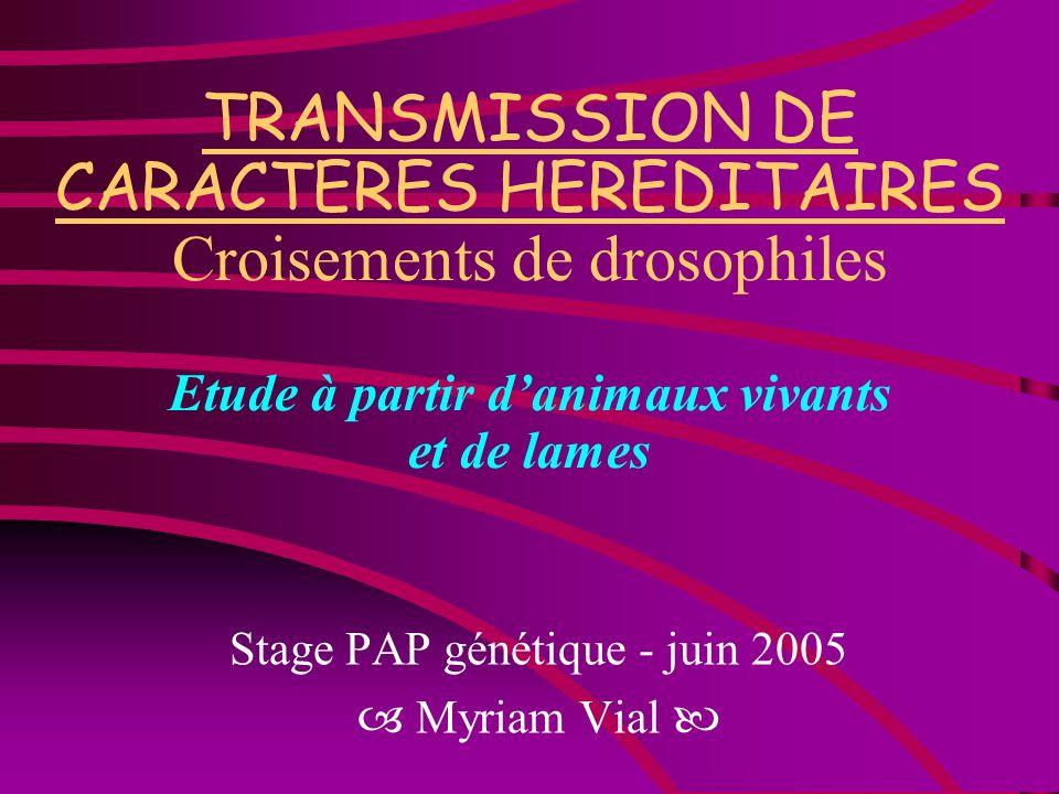 TRANSMISSION DE CARACTERES HEREDITAIRES Croisements de drosophiles Etude à partir danimaux vivants et de lames Stage PAP génétique - juin 2005 Myriam