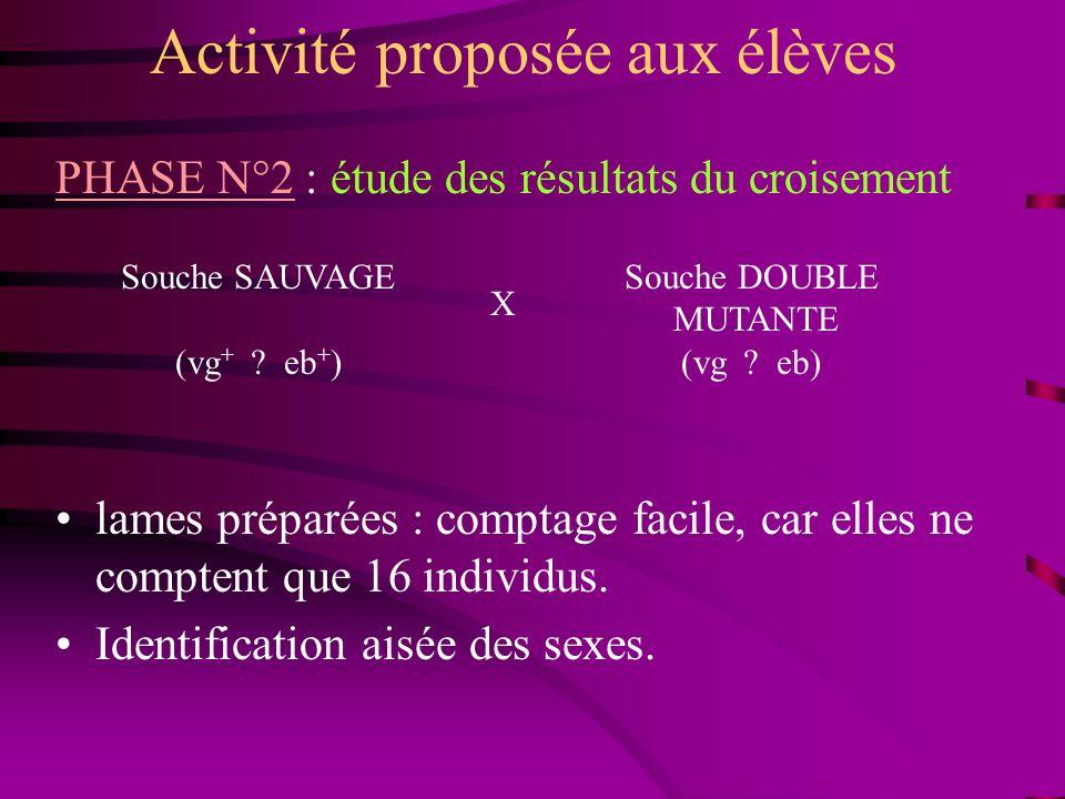 Activité proposée aux élèves PHASE N°2 : étude des résultats du croisement lames préparées : comptage facile, car elles ne comptent que 16 individus.