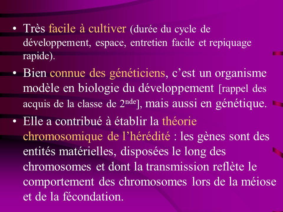 Génome : cartographié et séquencé, Plusieurs centaines de mutations sont connues chez les drosophiles, elles portent sur : –la couleur des yeux, –la forme des yeux, –la forme des aîles, –la couleur du corps, –… Documents ressources : –différents schémas, montrant de nombreux mutants, –schémas sur le dimorphisme sexuel.