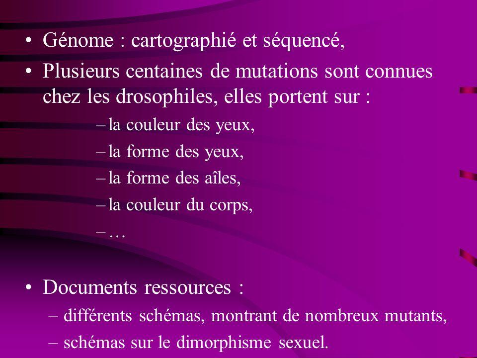 Génome : cartographié et séquencé, Plusieurs centaines de mutations sont connues chez les drosophiles, elles portent sur : –la couleur des yeux, –la f