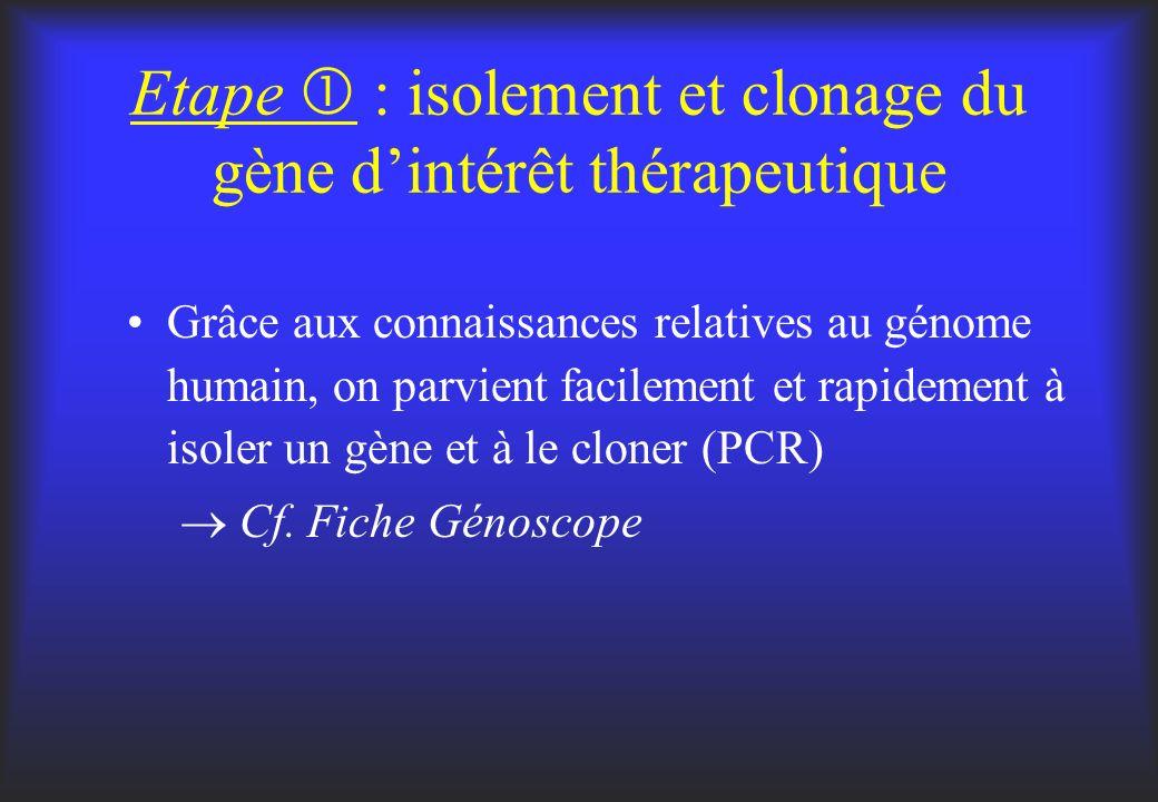 Etape : isolement et clonage du gène dintérêt thérapeutique Grâce aux connaissances relatives au génome humain, on parvient facilement et rapidement à