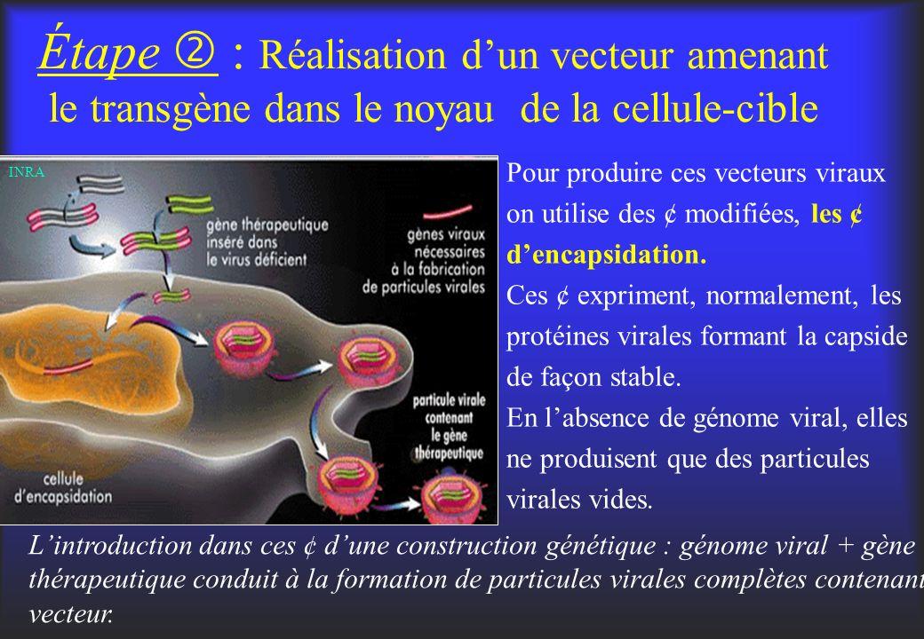 Étape : Réalisation dun vecteur amenant le transgène dans le noyau de la cellule-cible Pour produire ces vecteurs viraux on utilise des ¢ modifiées, l