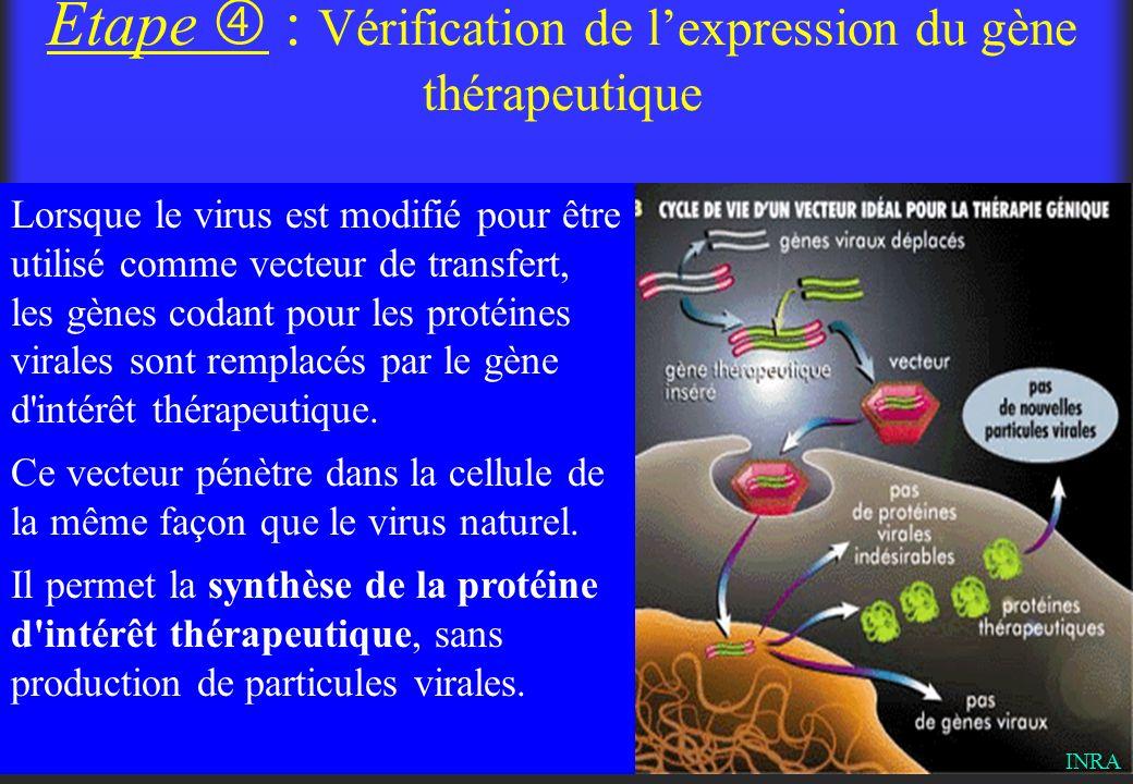 Étape : Vérification de lexpression du gène thérapeutique Lorsque le virus est modifié pour être utilisé comme vecteur de transfert, les gènes codant