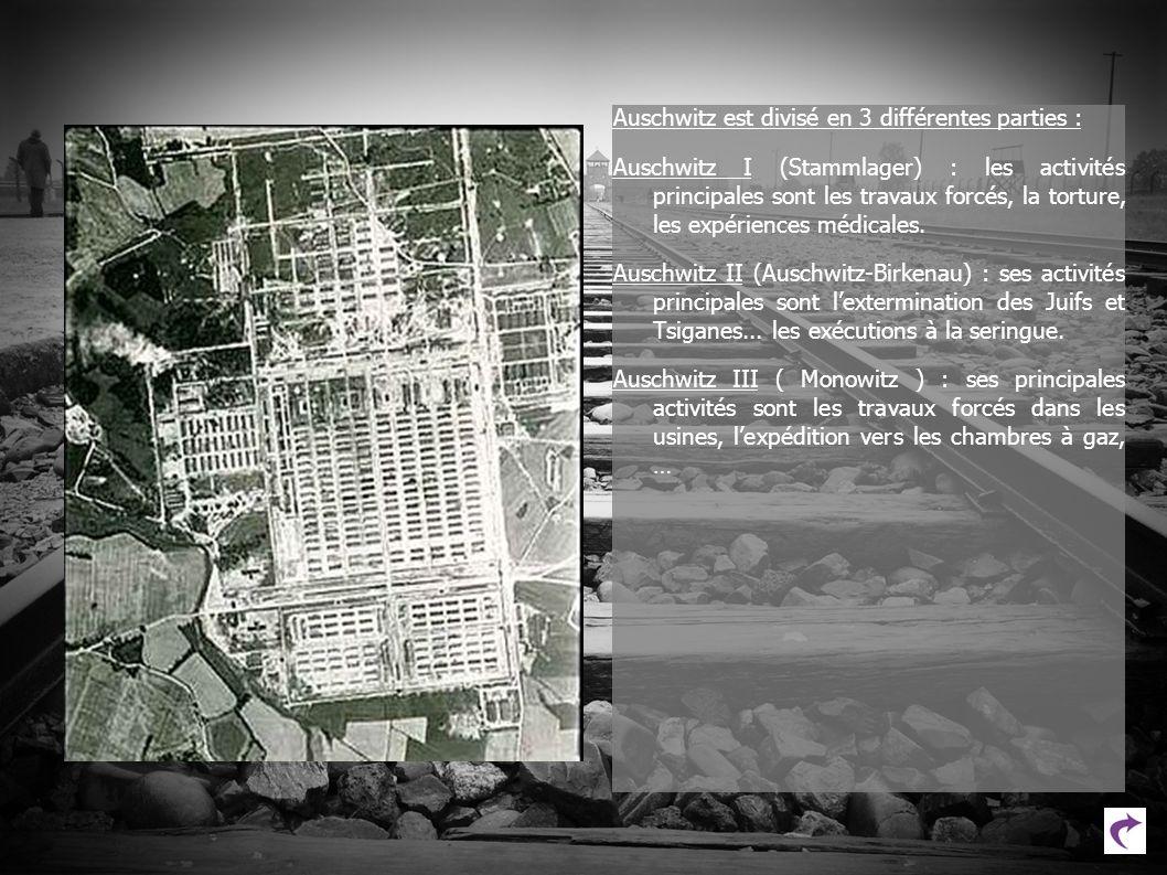 Auschwitz est divisé en 3 différentes parties : Auschwitz I (Stammlager) : les activités principales sont les travaux forcés, la torture, les expérien