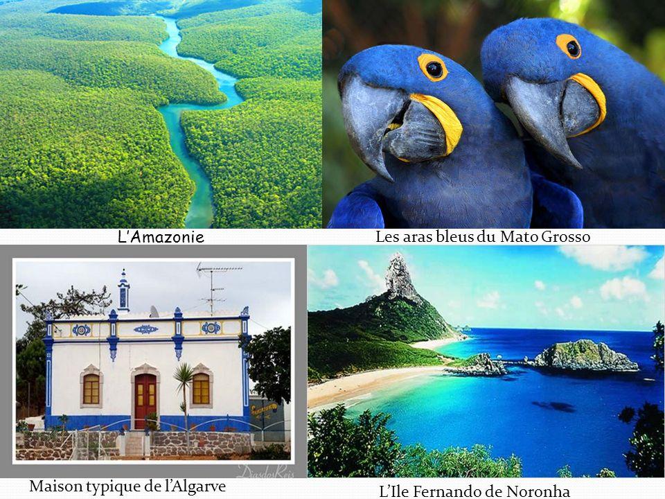 LAmazonie Les aras bleus du Mato Grosso Maison typique de lAlgarve LIle Fernando de Noronha