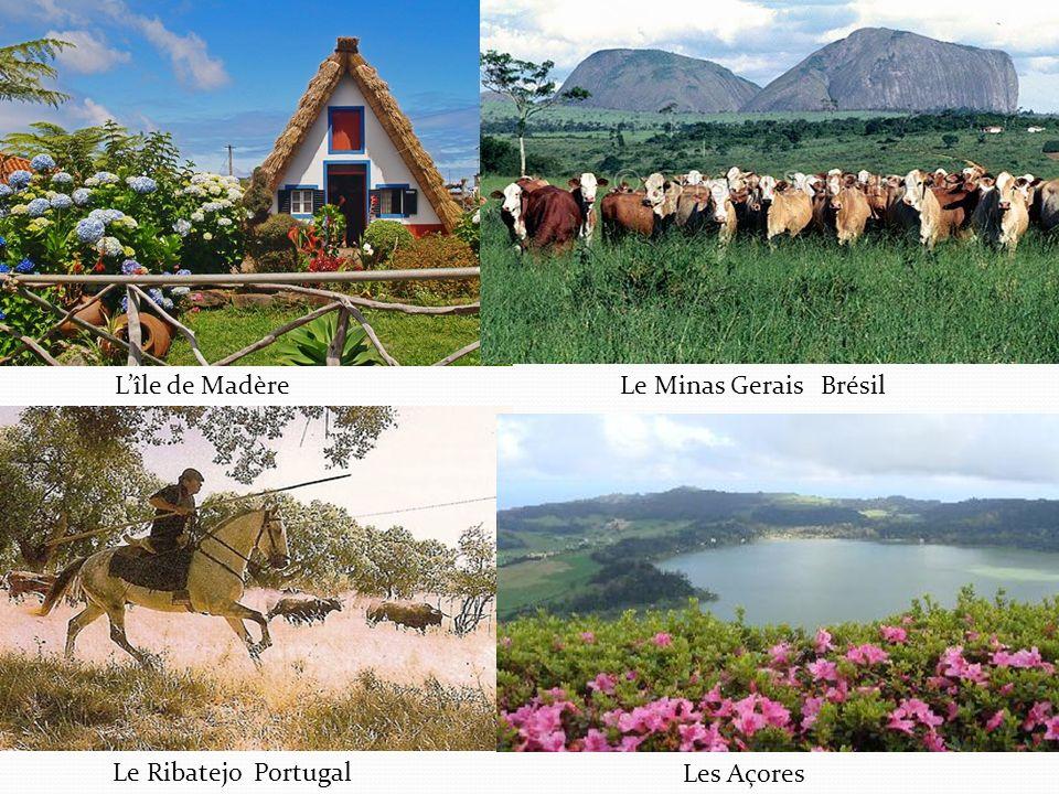 Lîle de MadèreLe Minas Gerais Brésil Le Ribatejo Portugal Les Açores