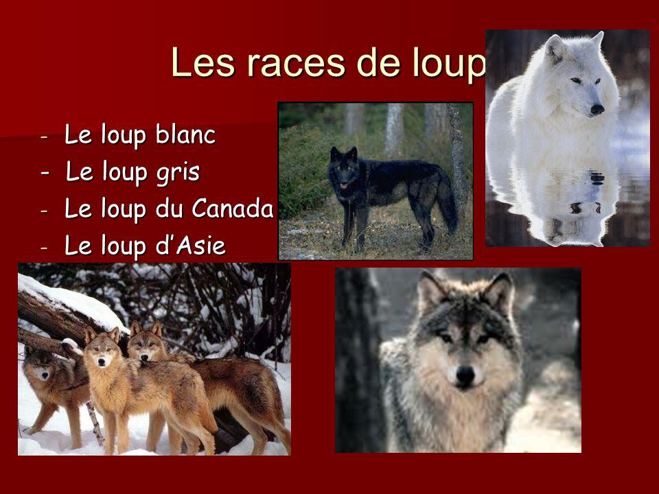 Les races de loup - Le loup blanc - Le loup gris - Le loup du Canada - Le loup dAsie