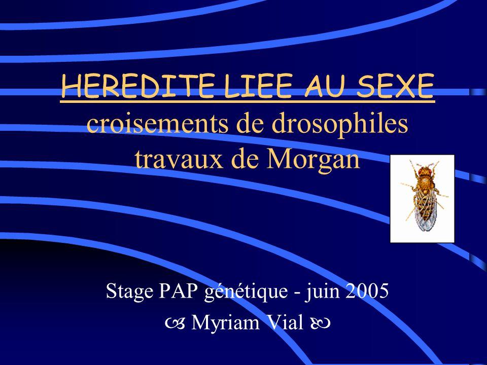 HEREDITE LIEE AU SEXE croisements de drosophiles travaux de Morgan Stage PAP génétique - juin 2005 Myriam Vial