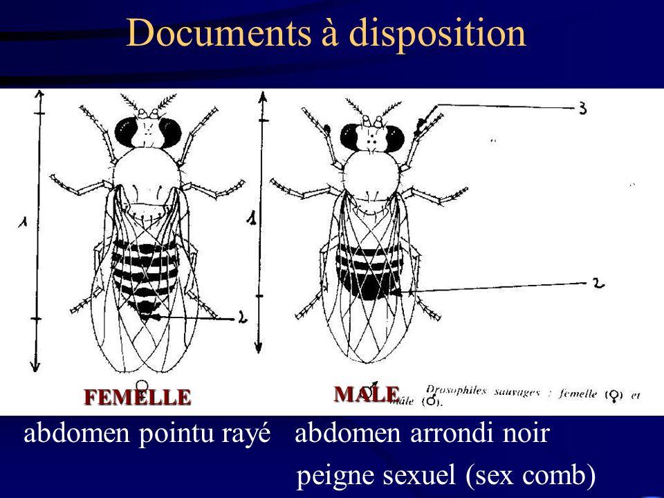 Documents à disposition abdomen pointu rayé abdomen arrondi noir peigne sexuel (sex comb) FEMELLE MALE