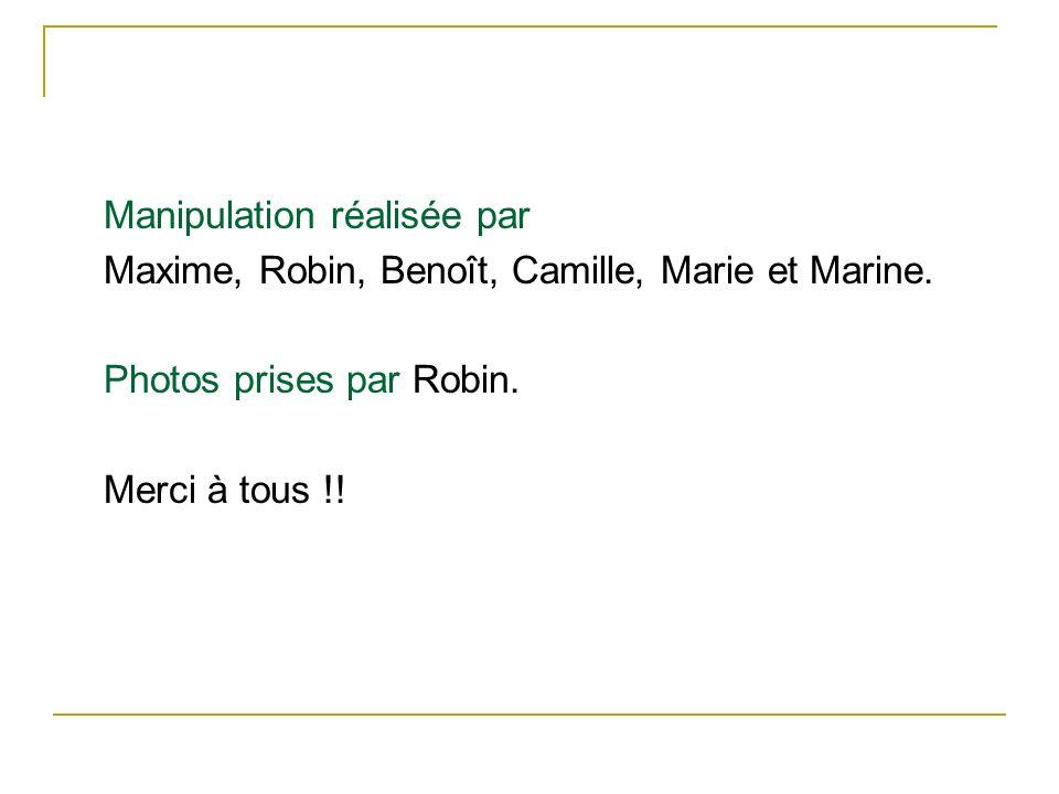 Manipulation réalisée par Maxime, Robin, Benoît, Camille, Marie et Marine. Photos prises par Robin. Merci à tous !!