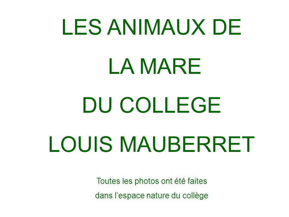 LES ANIMAUX DE LA MARE DU COLLEGE LOUIS MAUBERRET Toutes les photos ont été faites dans lespace nature du collège