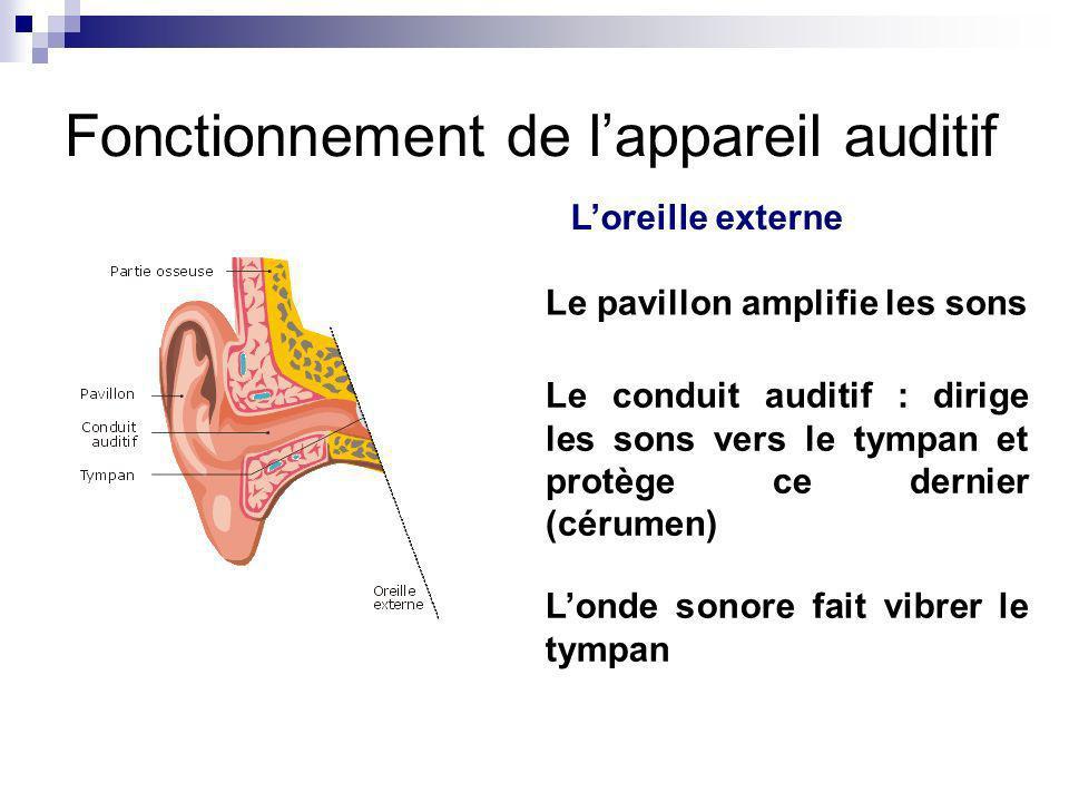 Fonctionnement de lappareil auditif Loreille externe Le pavillon amplifie les sons Le conduit auditif : dirige les sons vers le tympan et protège ce d