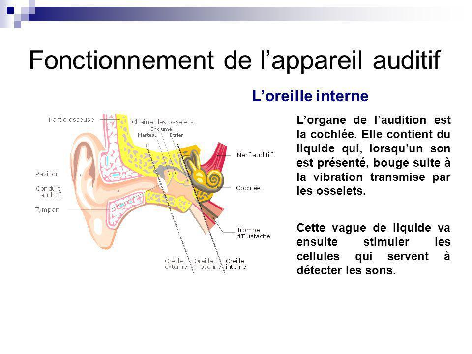 Loreille interne Lorgane de laudition est la cochlée. Elle contient du liquide qui, lorsquun son est présenté, bouge suite à la vibration transmise pa