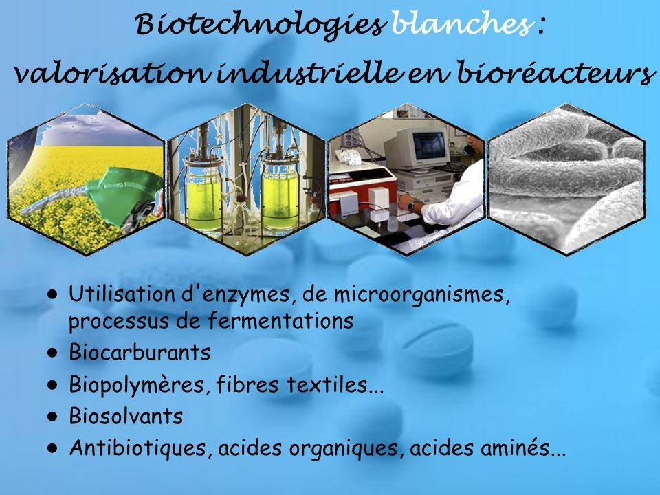 Biotechnologies blanches : valorisation industrielle en bioréacteurs Utilisation d enzymes, de microorganismes, processus de fermentations Biocarburants Biopolymères, fibres textiles...