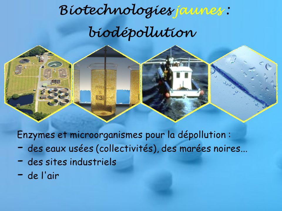 La filière STL –BIOTECHNOLOGIES: lautre voie scientifique