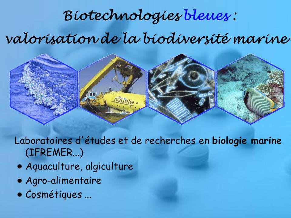 Biotechnologies bleues : valorisation de la biodiversité marine Laboratoires d études et de recherches en biologie marine (IFREMER...) Aquaculture, algiculture Agro-alimentaire Cosmétiques...