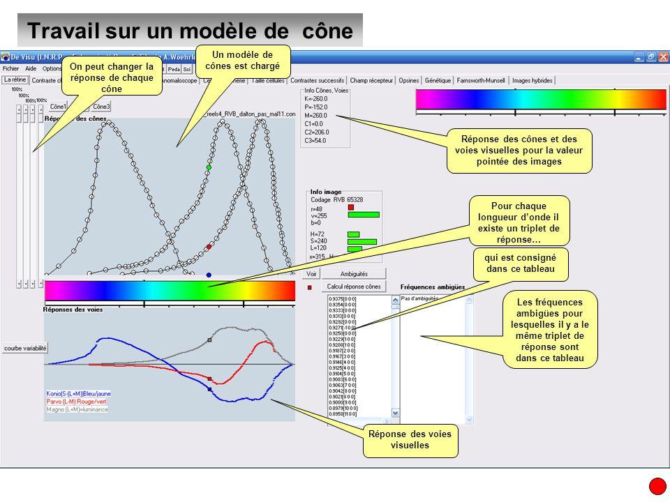Travail sur un modèle de cône Un modèle de cônes est chargé On peut changer la réponse de chaque cône Pour chaque longueur donde il existe un triplet