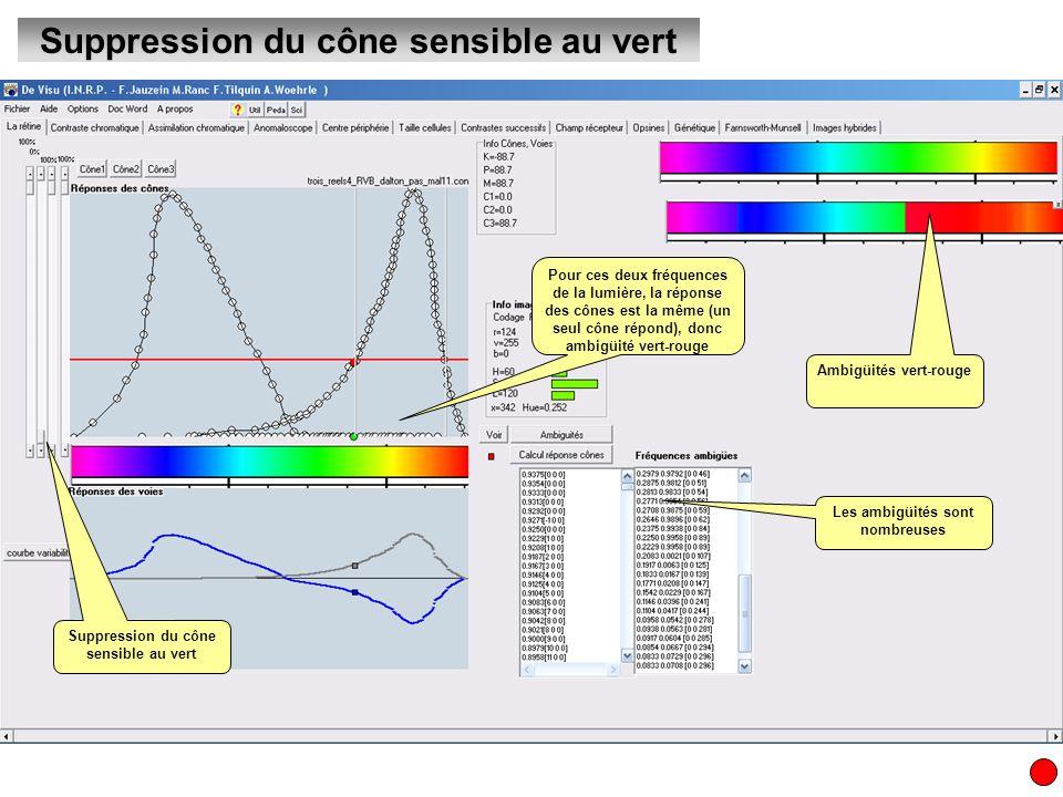 Suppression du cône sensible au vert Les ambigüités sont nombreuses Pour ces deux fréquences de la lumière, la réponse des cônes est la même (un seul