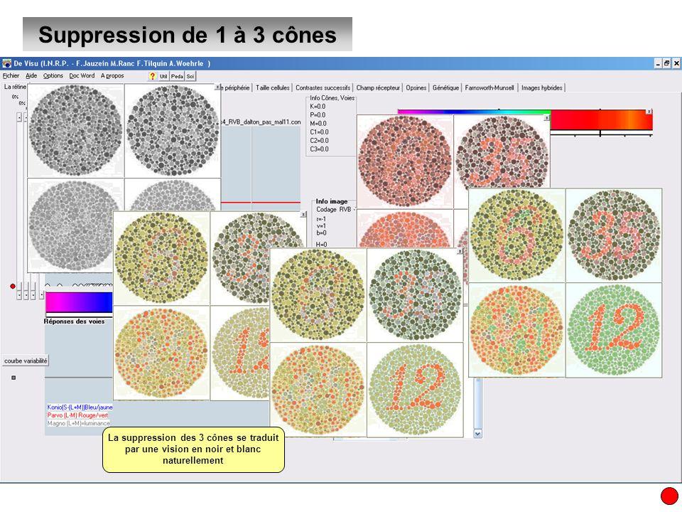 Création dun modèle de sensibilité à la couleur Création dun modèle à 2 cônes (click droit, créer des points puis bouton cone1, cone2, cone3) Il existe des fréquences ambigües …et des fréquences non couvertes Il ne doit pas y avoir deux fréquences différentes de la lumière qui provoquent les mêmes triplets de réponse …et que tout le spectre lumineux doit être couvert