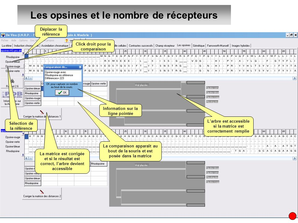 Les opsines et le nombre de récepteurs Déplacer la référence Sélection de la référence Information sur la ligne pointée Click droit pour la comparaiso