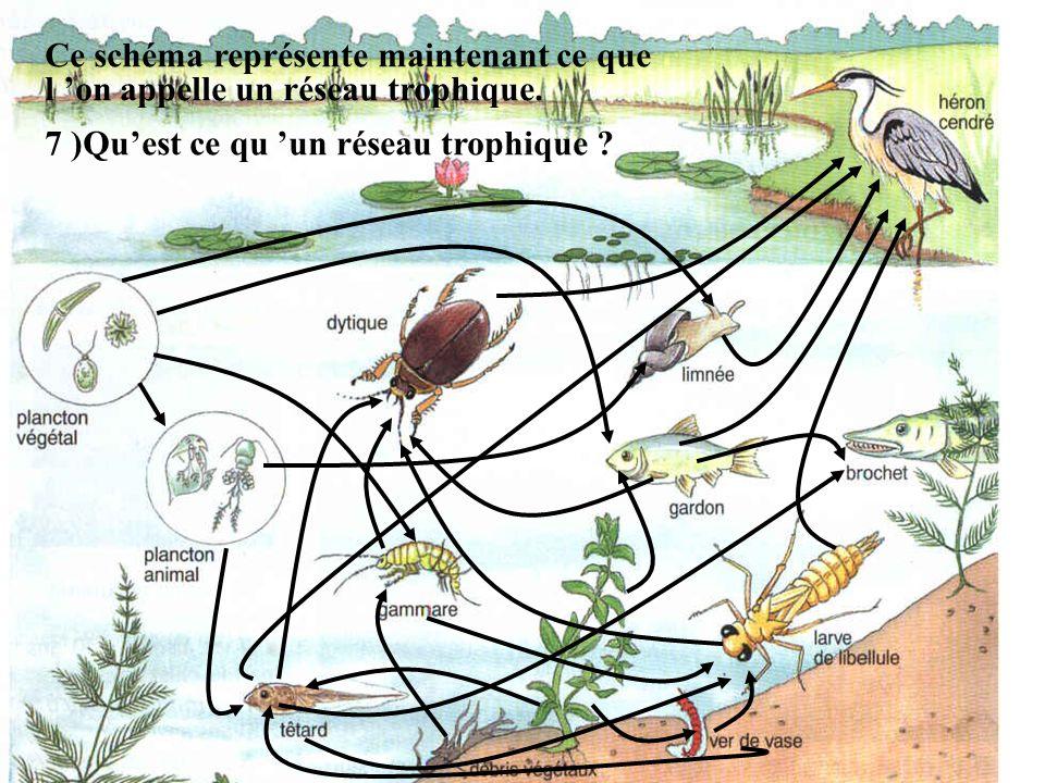 Ce schéma représente maintenant ce que l on appelle un réseau trophique. 7 )Quest ce qu un réseau trophique ?