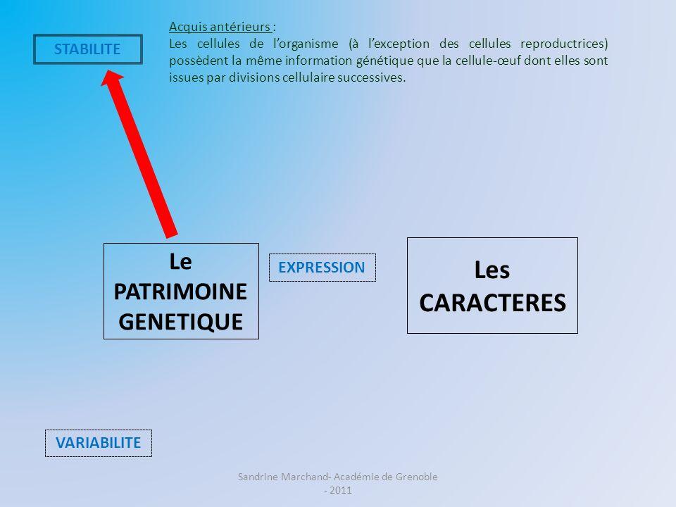 Le PATRIMOINE GENETIQUE Les CARACTERES VARIABILITE EXPRESSION Acquis antérieurs : Les cellules de lorganisme (à lexception des cellules reproductrices