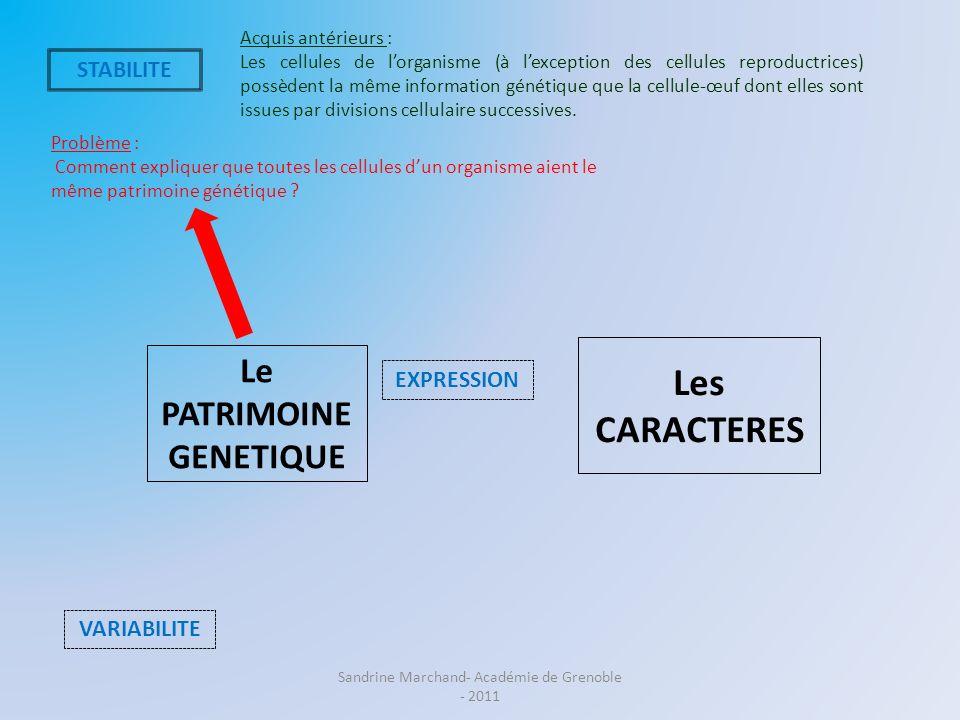 Le PATRIMOINE GENETIQUE Les CARACTERES VARIABILITE EXPRESSION Problème : Comment expliquer que toutes les cellules dun organisme aient le même patrimo