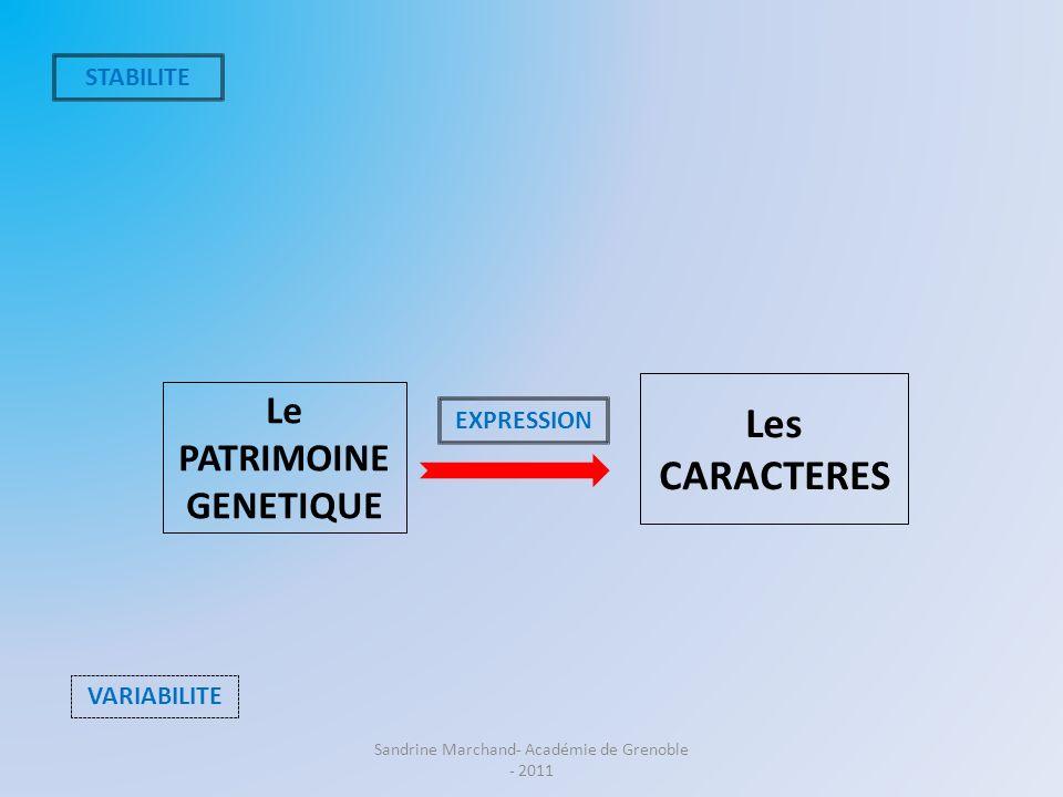 Le PATRIMOINE GENETIQUE Les CARACTERES STABILITE VARIABILITE EXPRESSION Sandrine Marchand- Académie de Grenoble - 2011