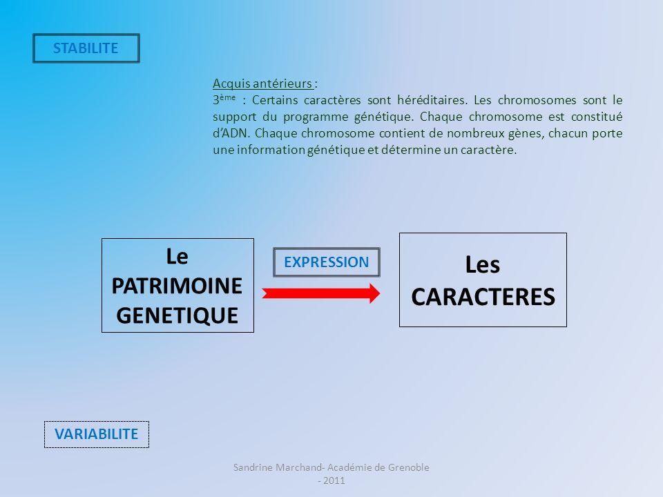 Le PATRIMOINE GENETIQUE Les CARACTERES STABILITE VARIABILITE EXPRESSION Acquis antérieurs : 3 ème : Certains caractères sont héréditaires. Les chromos