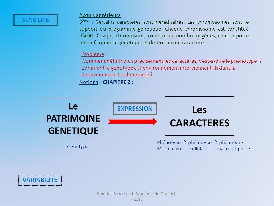 Le PATRIMOINE GENETIQUE Les CARACTERES STABILITE VARIABILITE EXPRESSION Problème : Comment définir plus précisément les caractères, cest-à-dire le phé
