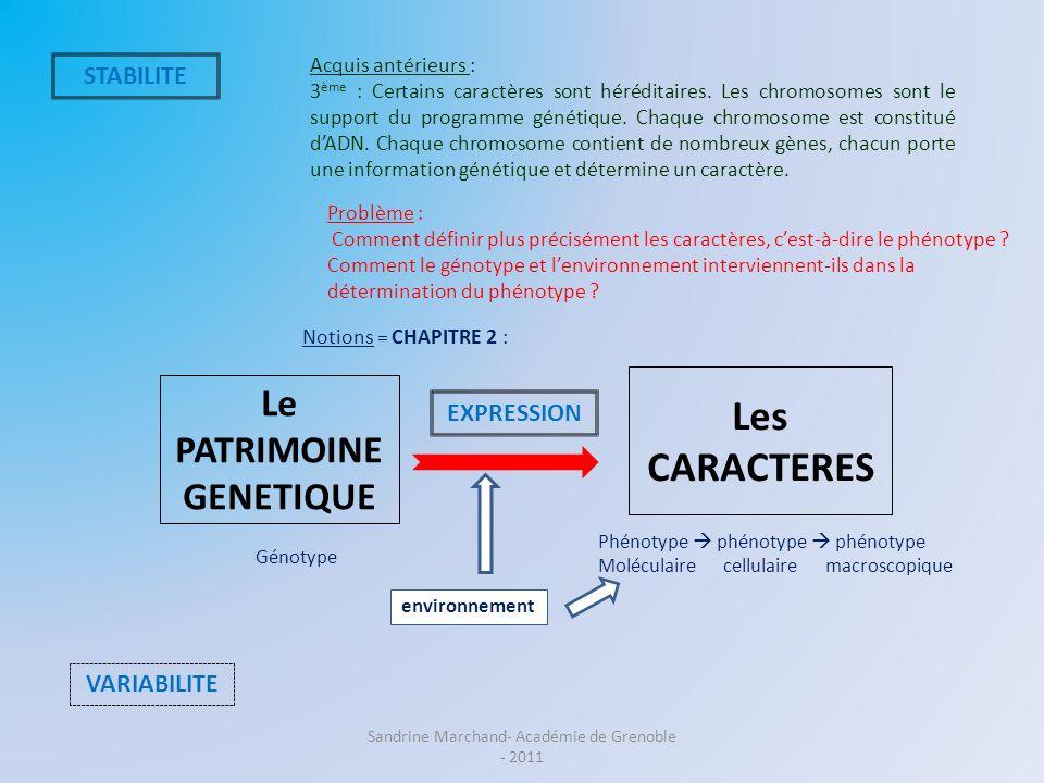 Le PATRIMOINE GENETIQUE Les CARACTERES STABILITE VARIABILITE EXPRESSION Notions = CHAPITRE 2 : Phénotype phénotype phénotype Moléculaire cellulaire ma