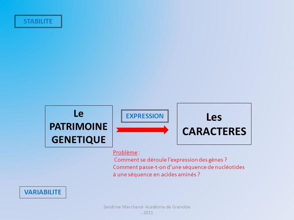 Le PATRIMOINE GENETIQUE Les CARACTERES STABILITE VARIABILITE EXPRESSION Problème : Comment se déroule lexpression des gènes ? Comment passe-t-on dune