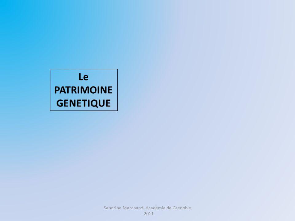 Le PATRIMOINE GENETIQUE Les CARACTERES STABILITE VARIABILITE EXPRESSION Problème : Comment expliquer la diversité des allèles .