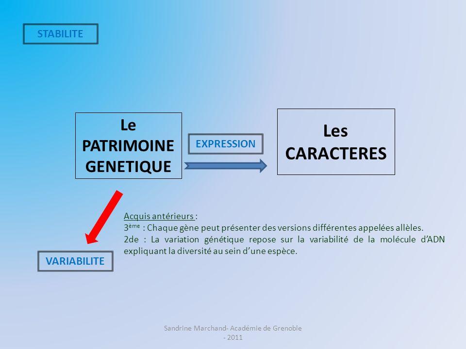 Le PATRIMOINE GENETIQUE Les CARACTERES STABILITE VARIABILITE EXPRESSION Acquis antérieurs : 3 ème : Chaque gène peut présenter des versions différente