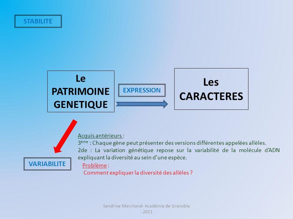 Le PATRIMOINE GENETIQUE Les CARACTERES STABILITE VARIABILITE EXPRESSION Problème : Comment expliquer la diversité des allèles ? Acquis antérieurs : 3