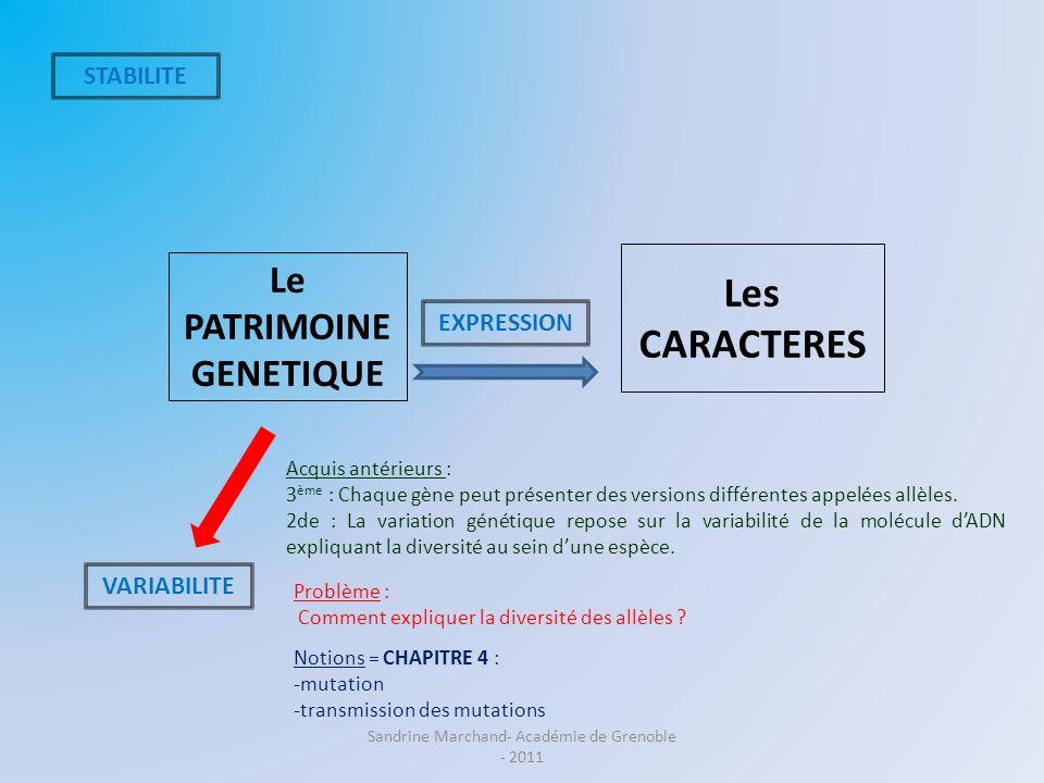 Le PATRIMOINE GENETIQUE Les CARACTERES STABILITE VARIABILITE EXPRESSION Problème : Comment expliquer la diversité des allèles ? Notions = CHAPITRE 4 :