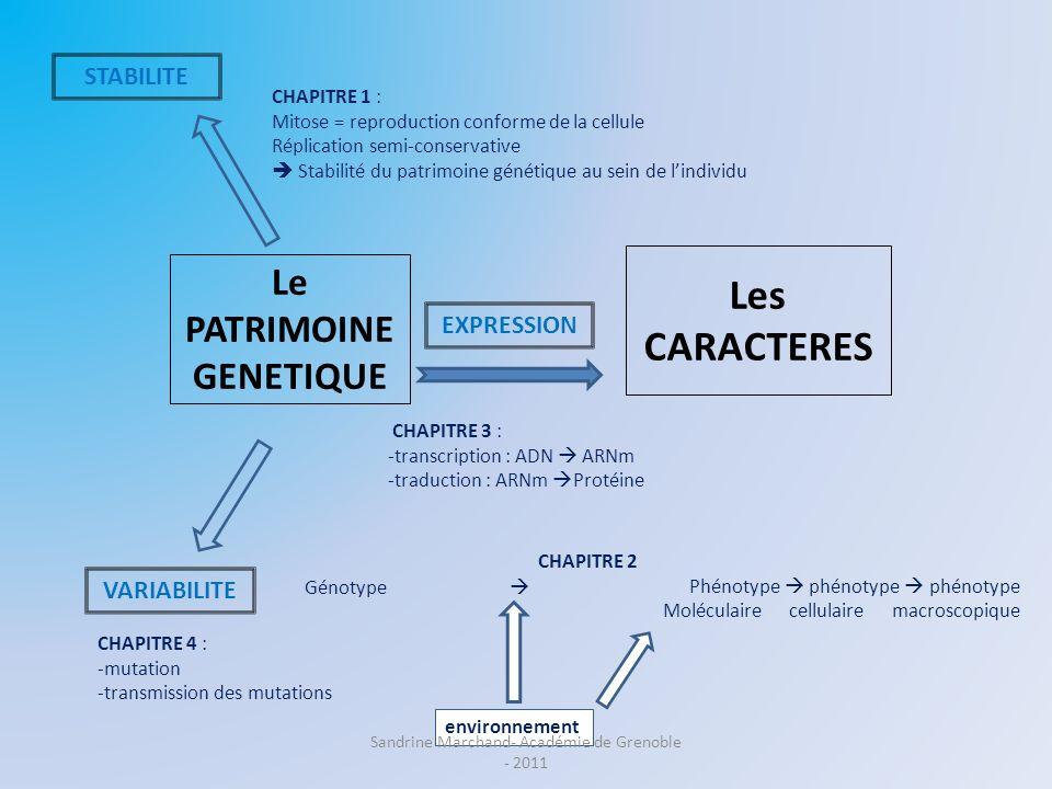 Le PATRIMOINE GENETIQUE Les CARACTERES STABILITE VARIABILITE EXPRESSION CHAPITRE 4 : -mutation -transmission des mutations CHAPITRE 3 : -transcription