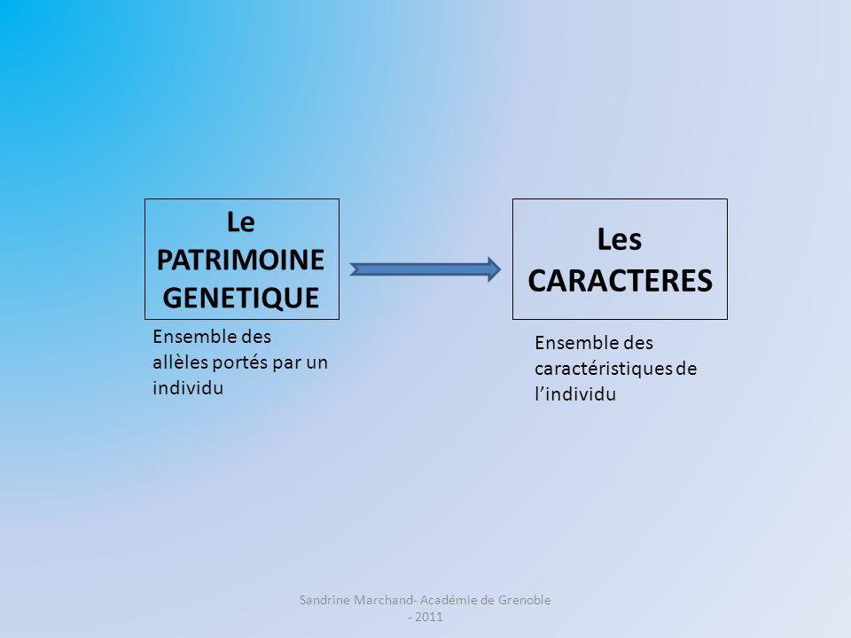 Le PATRIMOINE GENETIQUE Les CARACTERES Ensemble des caractéristiques de lindividu Ensemble des allèles portés par un individu Sandrine Marchand- Acadé