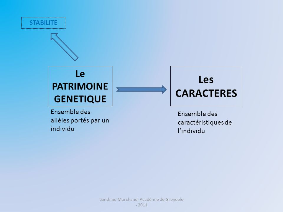 Le PATRIMOINE GENETIQUE Les CARACTERES Ensemble des caractéristiques de lindividu STABILITE VARIABILITE Ensemble des allèles portés par un individu Sandrine Marchand- Académie de Grenoble - 2011