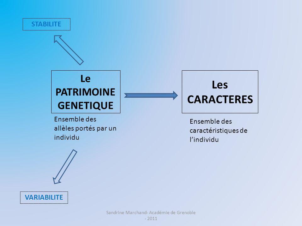 Le PATRIMOINE GENETIQUE Les CARACTERES Ensemble des caractéristiques de lindividu STABILITE VARIABILITE EXPRESSION Ensemble des allèles portés par un individu Sandrine Marchand- Académie de Grenoble - 2011