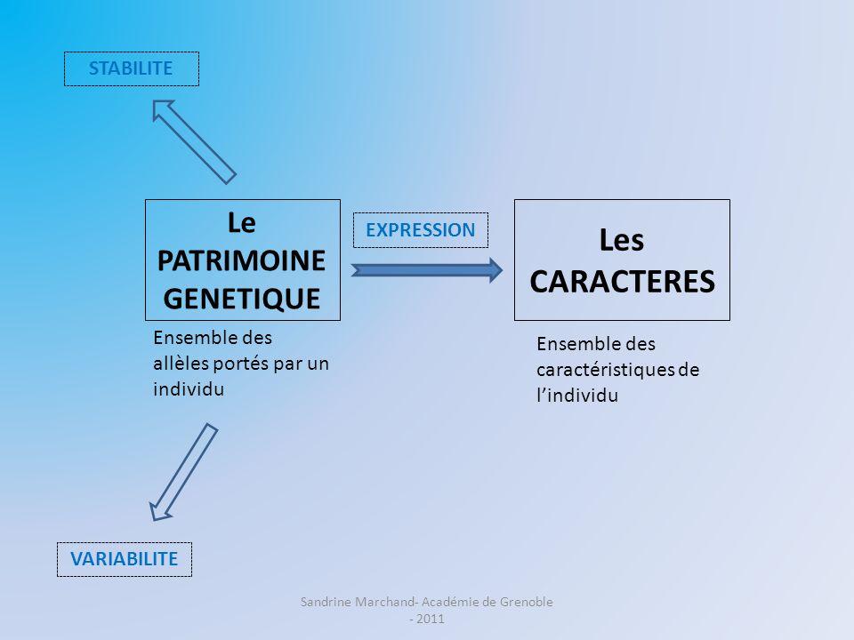 Le PATRIMOINE GENETIQUE Les CARACTERES Ensemble des caractéristiques de lindividu STABILITE VARIABILITE EXPRESSION Ensemble des allèles portés par un