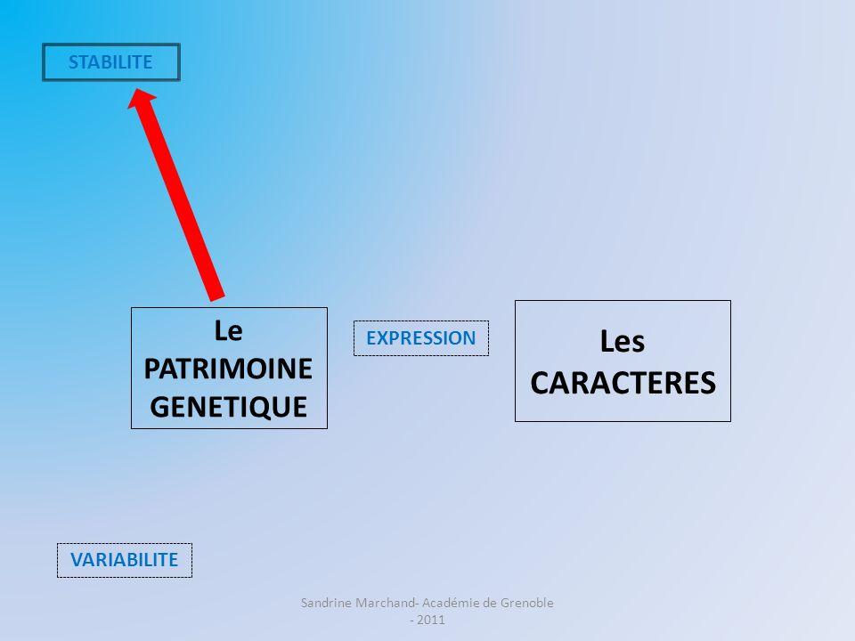 Le PATRIMOINE GENETIQUE Les CARACTERES VARIABILITE EXPRESSION Acquis antérieurs : Les cellules de lorganisme (à lexception des cellules reproductrices) possèdent la même information génétique que la cellule-œuf dont elles sont issues par divisions cellulaire successives.