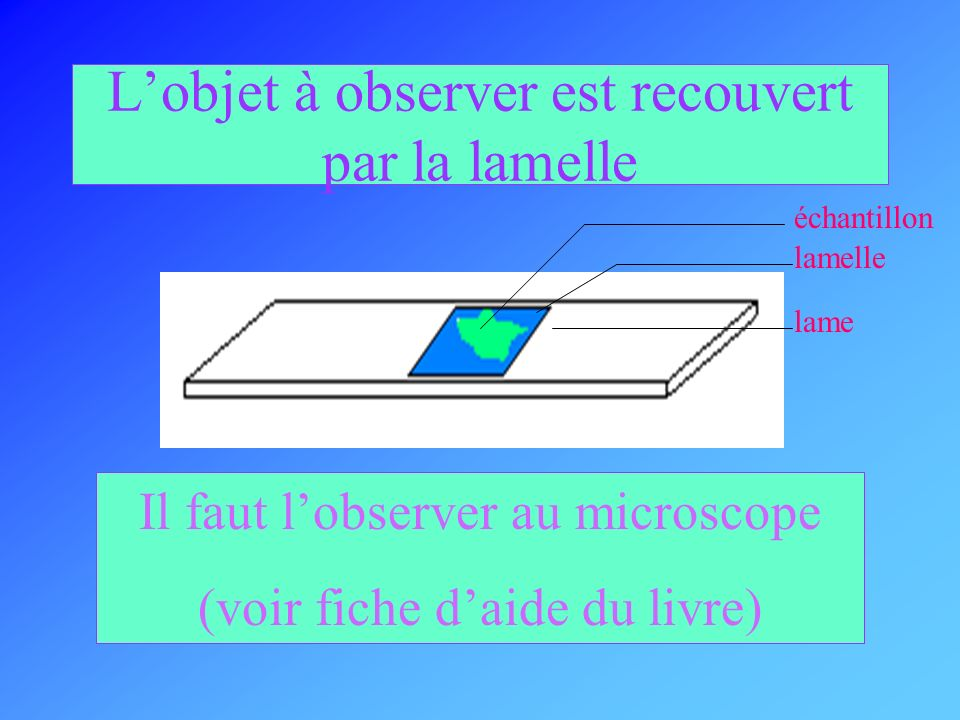 Lobjet à observer est recouvert par la lamelle lamelle échantillon lame Il faut lobserver au microscope (voir fiche daide du livre)