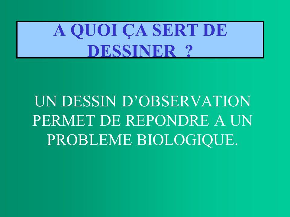 A QUOI ÇA SERT DE DESSINER ? UN DESSIN DOBSERVATION PERMET DE REPONDRE A UN PROBLEME BIOLOGIQUE.