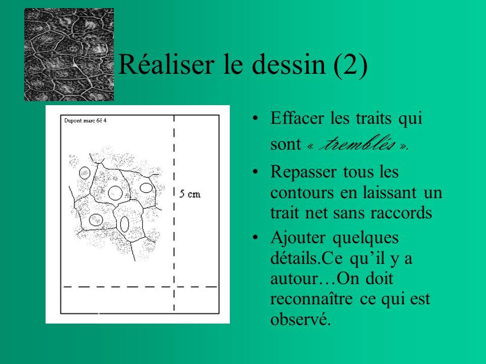 Réaliser le dessin (1) Sans appuyer le crayon, tracer au centre du rectangle obtenu, le contour général de lobjet à observer. Lagrandir si nécessaire,