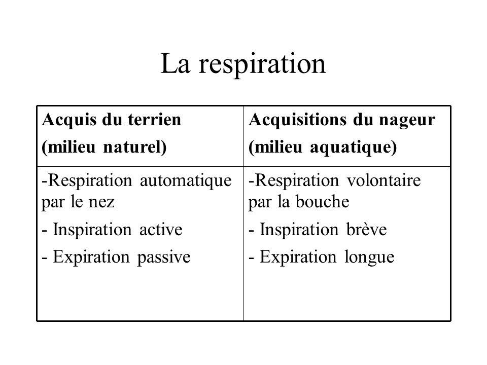 La respiration -Respiration volontaire par la bouche - Inspiration brève - Expiration longue -Respiration automatique par le nez - Inspiration active