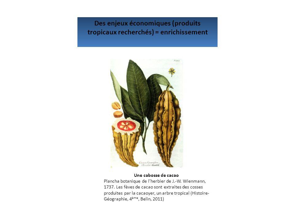 Des enjeux économiques (produits tropicaux recherchés) = enrichissement Une cabosse de cacao Plancha botanique de lherbier de J.-W. Wienmann, 1737. Le