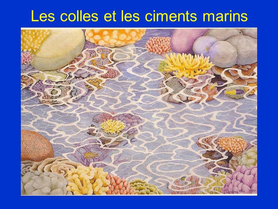 Les colles et les ciments marins
